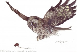 Owl chasing Mouse