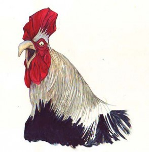 cockerel face